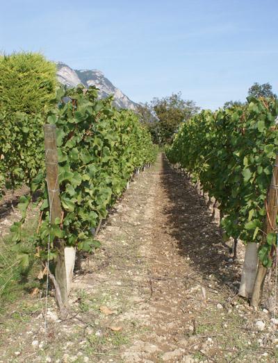 vignes © 123 Savoie