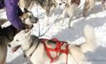 Thibault Beguin (Musher Aartu d'Artik) musher installé
