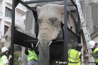 Dépose des Eléphants 2 - © Sergio Palumbo - 123 Savoie