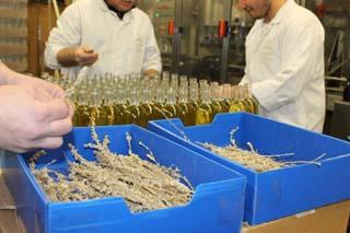 Distillerie des Alpes - Génépi mis en bouteille - © Sergio Palumbo - 123 Savoie