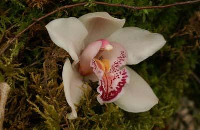 Habitat & Jardin Orchidée - © Sergio Palumbo - 123 Savoie - Chambéry 2