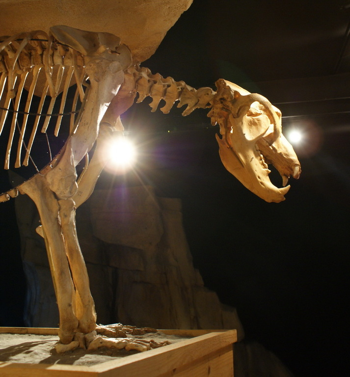 04-musee-de-l-ours.jpg