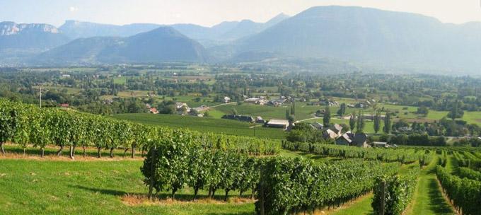 vignes à Apremont © 123 Savoie