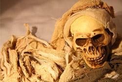 Hallowen squelette