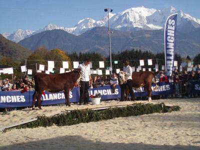 Concours de la race d'Abondance à Sallanches