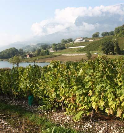 Bassin versant viticole du lac de Saint-André - © Université Savoie Mont Blanc