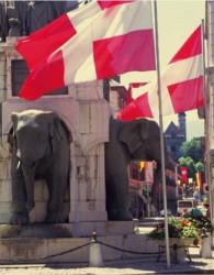 Les Eléphants CAdS