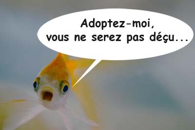 Poisson rouge