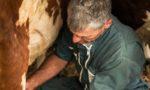 Respect de l'environnement, bien-être animal et biodiversité, des éleveurs Savoyards poursuivent leur travail